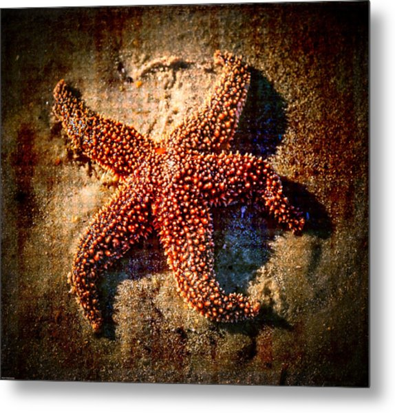 Starfish 2 Metal Print