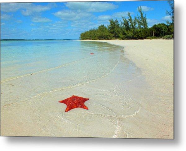 Starfish 5 Of Bottom Harbour Sound Metal Print