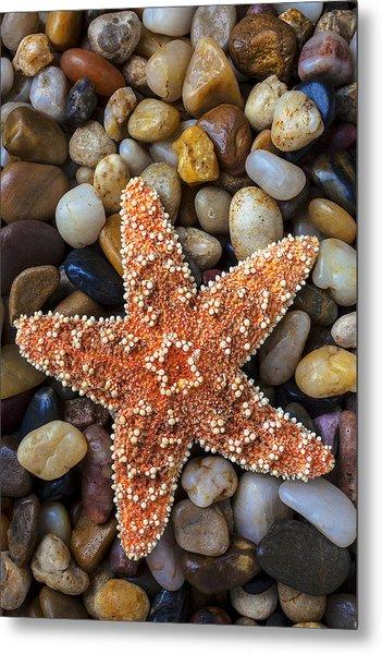Starfish On Rocks Metal Print