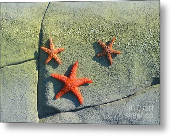 Starfish On The Rocks Metal Print