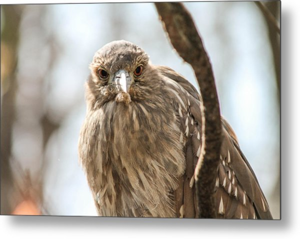 Staring Contest Metal Print