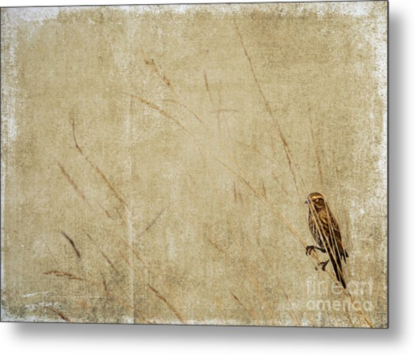 Starling In The Reeds Metal Print