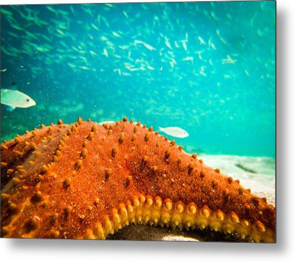Stars And Fish And Starfish Metal Print