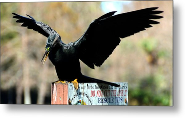 Stay Off Metal Print by Julie Cameron