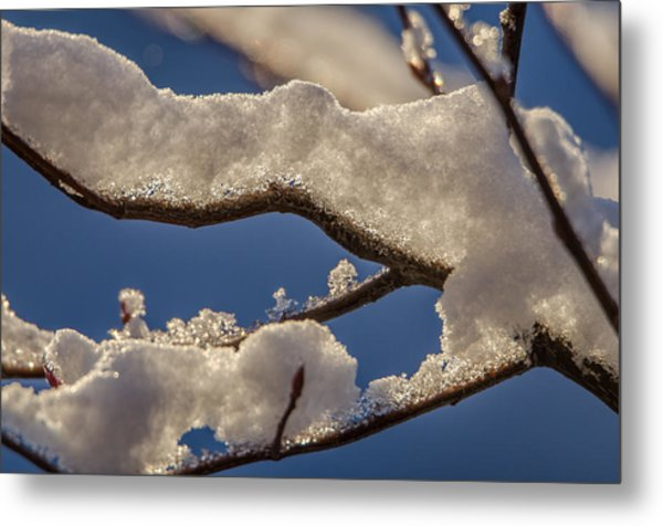 Staying Warm Metal Print