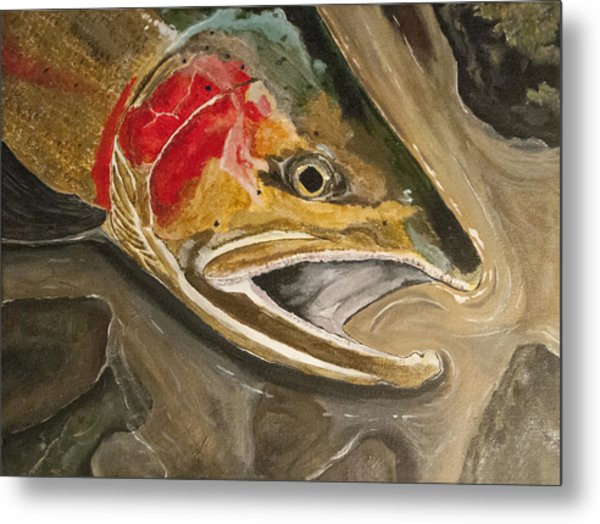 Steelhead Buck Metal Print