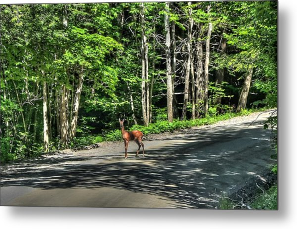 Sterling Valley Doe Metal Print