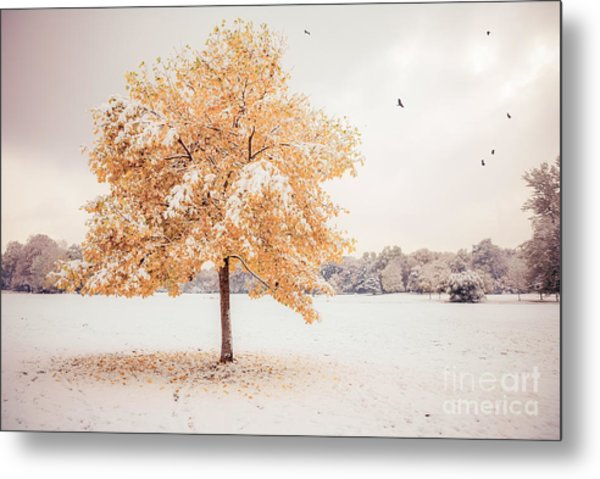 Still Dressed In Fall Metal Print