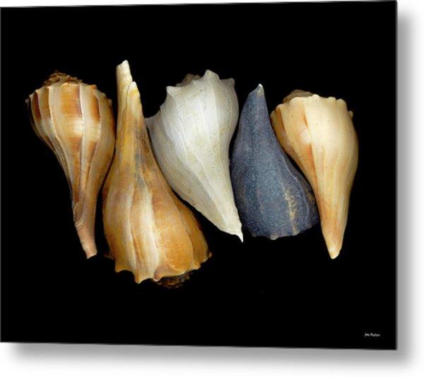 Still Life With Five Whelk Shells Metal Print