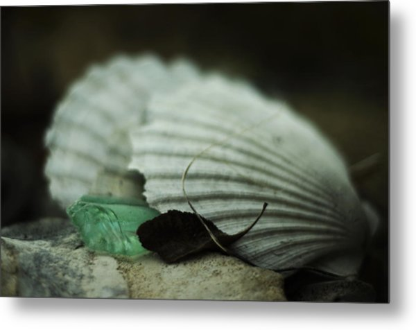 Still Life With Fossil Shells And Beach Glass Metal Print