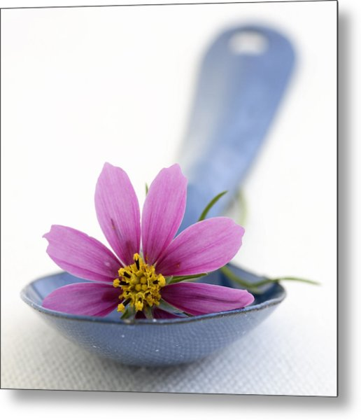 Still Life With Pink Flower On A Blue Spoon Metal Print by Frank Tschakert