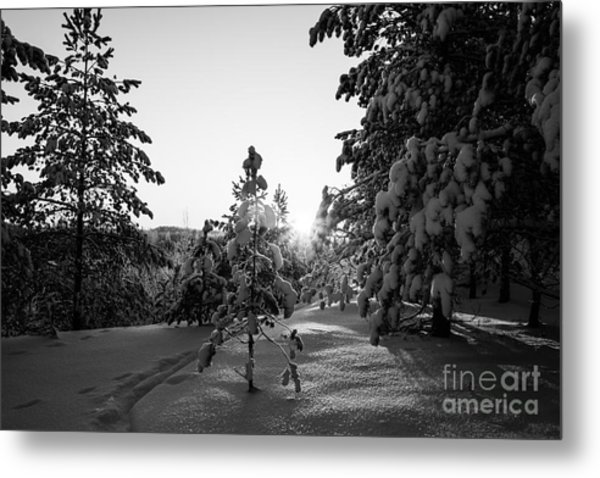Still Standing In The Winter Sunset Bw Metal Print
