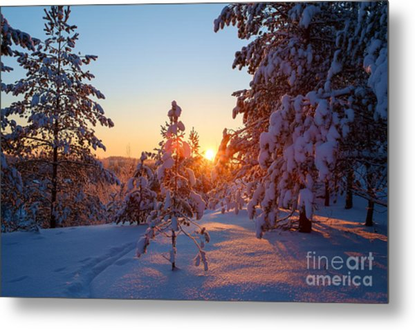 Still Standing In The Winter Sunset Metal Print