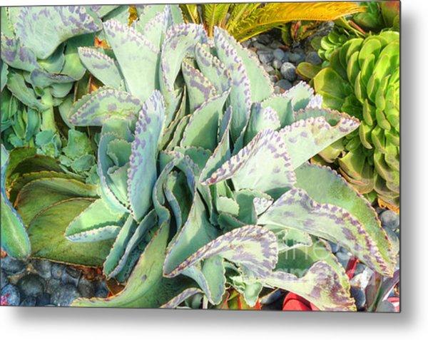 Stippled Cactus Metal Print by Deborah Smolinske