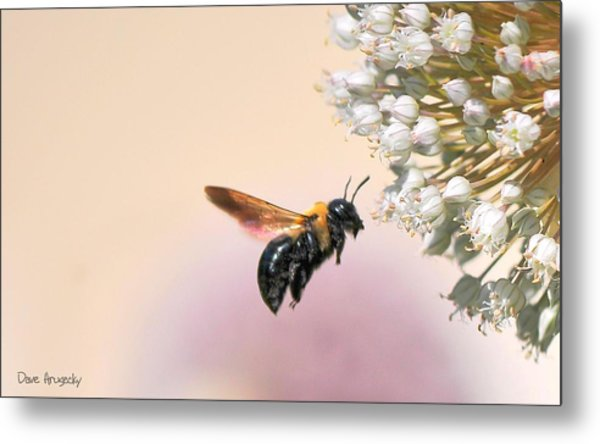 Stop And Smell The Flowers Metal Print by Dave Hrusecky
