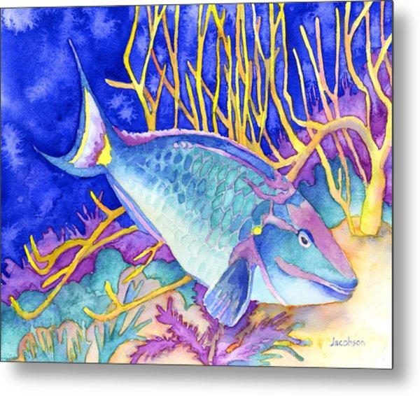 Stoplight Parrotfish Metal Print