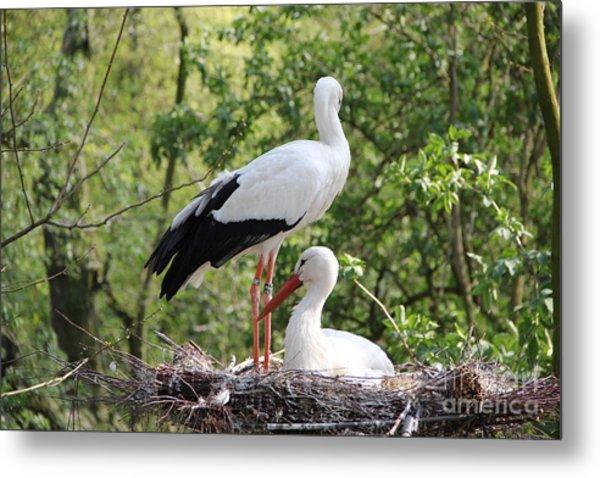 Storks Nesting Metal Print