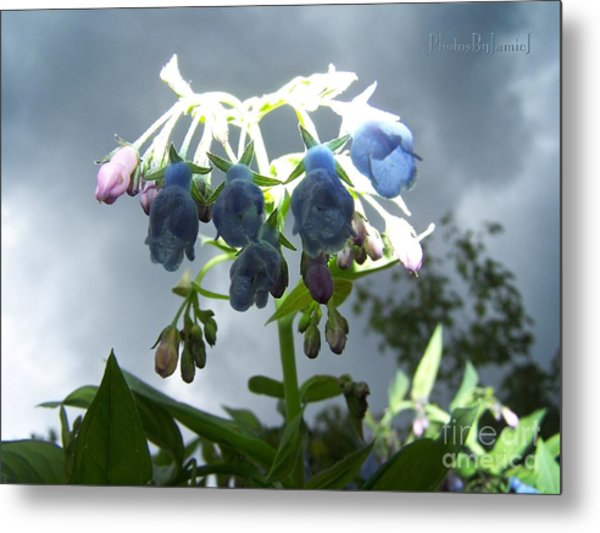 Stormy Bluebells Metal Print