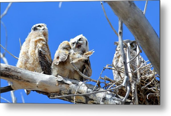 Story Time For The Owlets Part 5 Metal Print