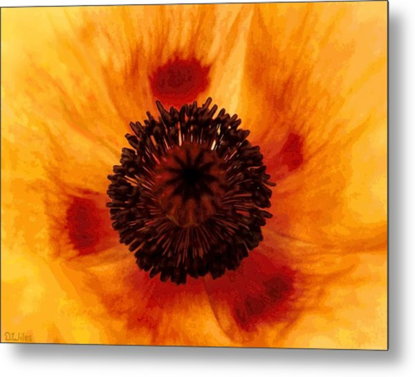 Straw Poppy Metal Print