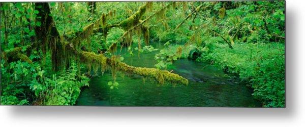 Stream Flowing Through A Rainforest Metal Print