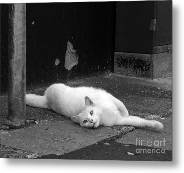 Street Cat Metal Print