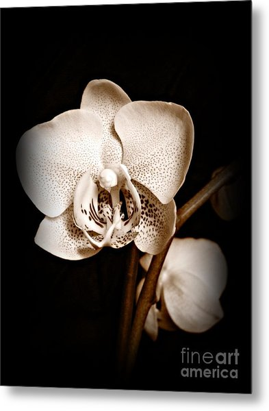 Strength And Beauty Sepia Metal Print