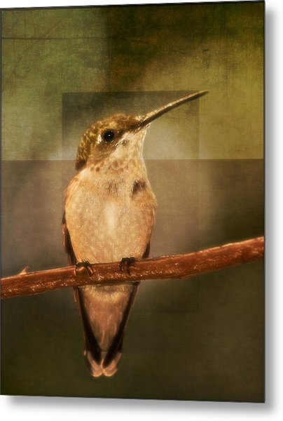 Strike A Hummingbird Pose Metal Print