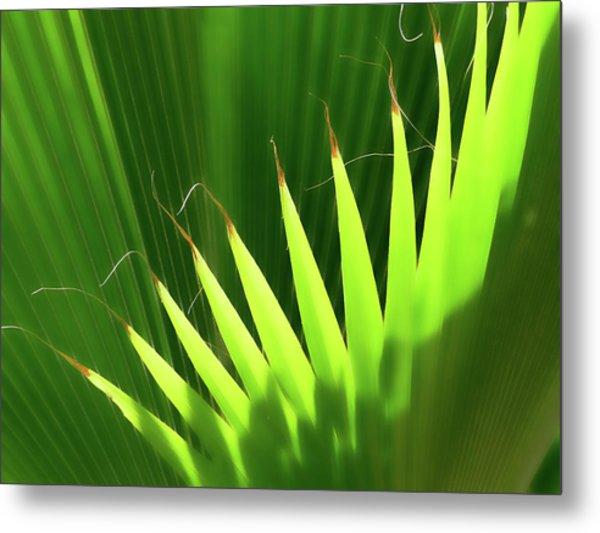 Stringy Palm Metal Print