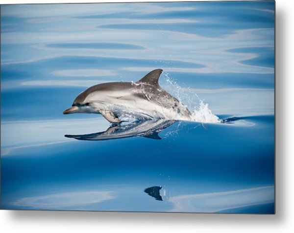 Striped Dolphin Metal Print