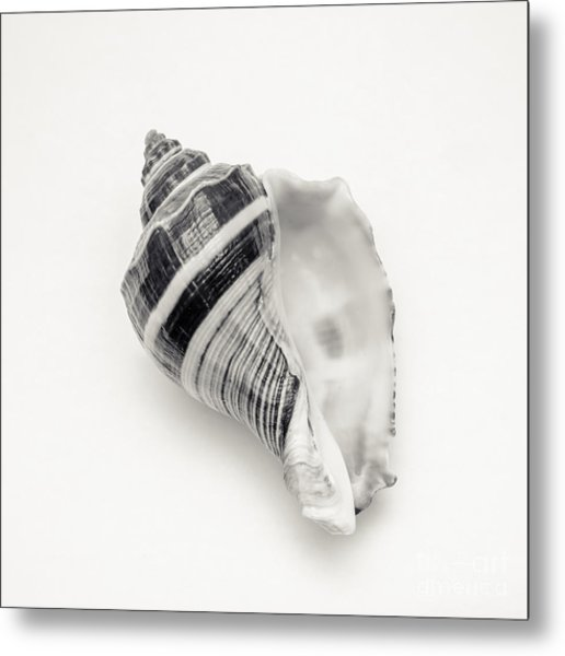Striped Sea Shell 2 Metal Print