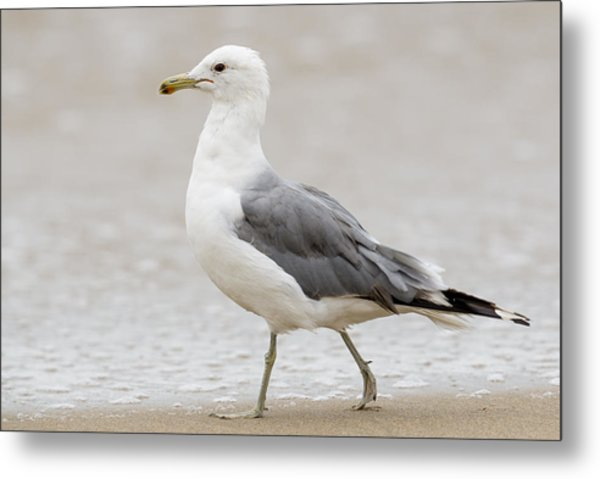Stroll Along The Beach Metal Print
