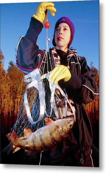 Student Weighing A Perch Metal Print