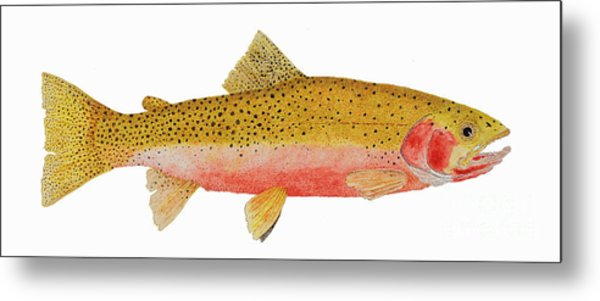 Study Of A Westslope Cutthroat Trout Metal Print