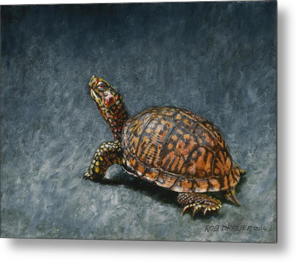 Study Of An Eastern Box Turtle Metal Print