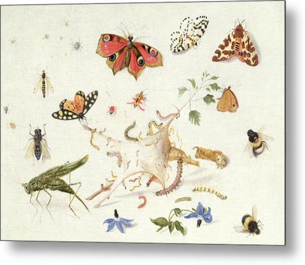Study Of Insects And Flowers Metal Print