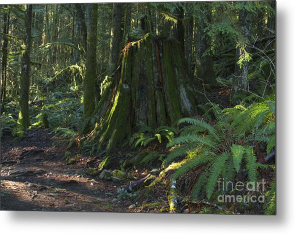 Stump And Fern Metal Print by Sharon Talson