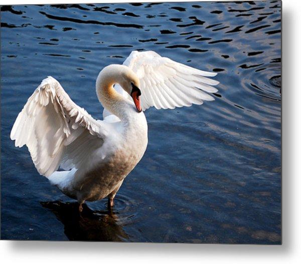 Stunning Swan Metal Print