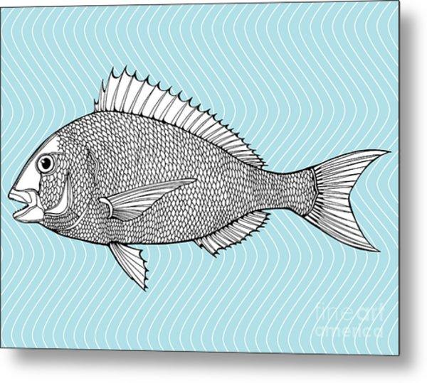 Stylized Fish. Sea Fish. Dorado. Black Metal Print