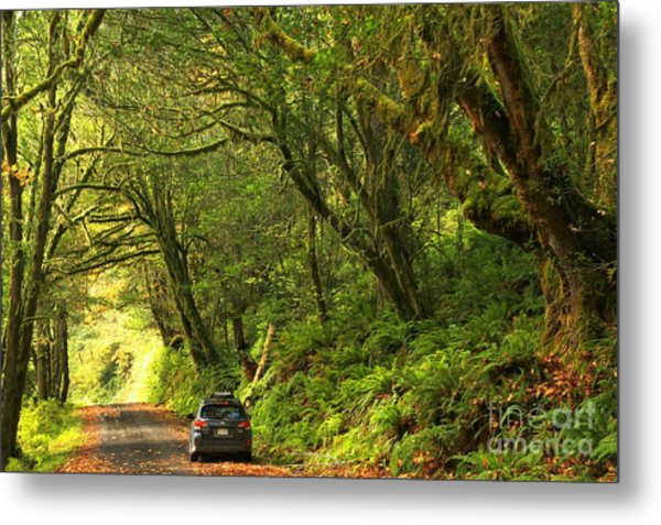 Subaru In The Rainforest Metal Print