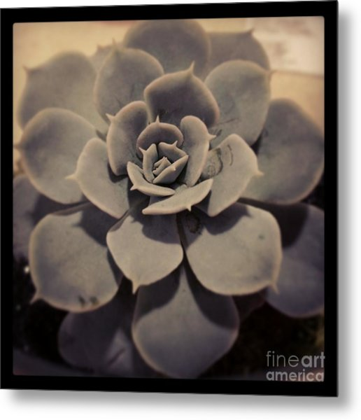 Succulent Metal Print by Heather L Wright