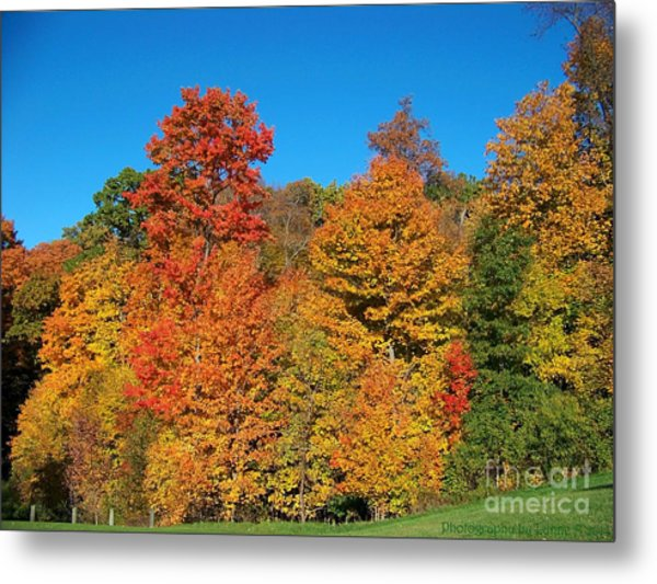 Such A Colorful Day 2 Metal Print