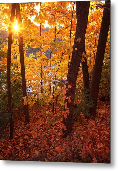 Sugar Maple Sunrise Metal Print