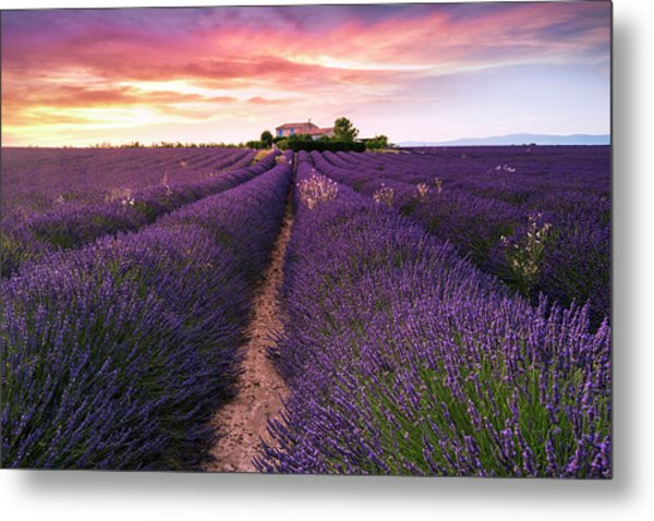 Summer At Valensole Metal Print
