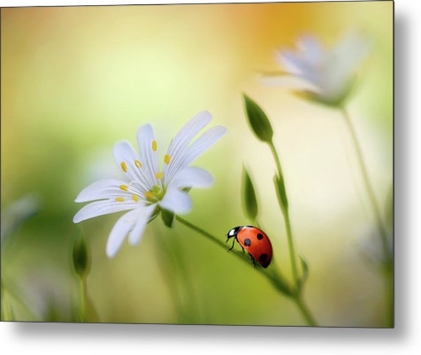 Summer Beauties Metal Print