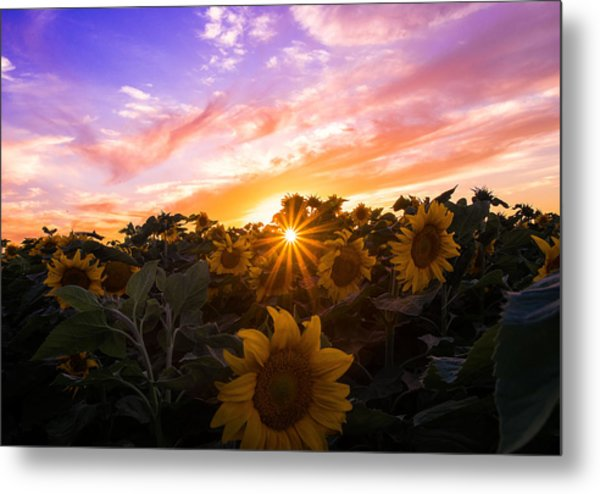Summer Colors Metal Print