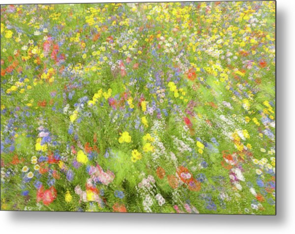 Summer Field Flowers.......... Metal Print by Piet Haaksma