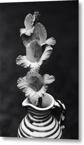 Metal Print featuring the photograph Summer Glads by Ben Shields