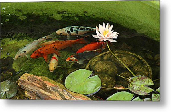 Summer Koi And Lilly Metal Print