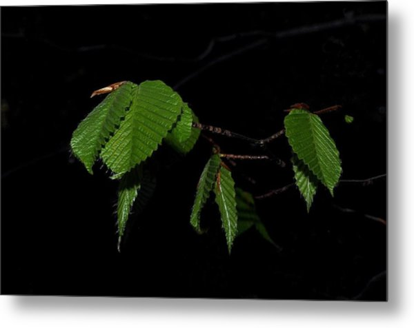 Summer Leaves On Black Metal Print